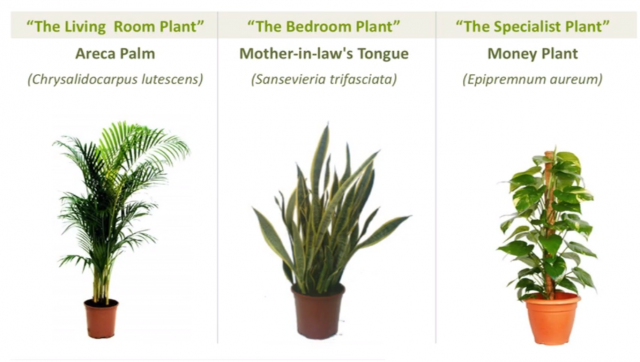 These 3 Plants With Let You Grow Your Own Fresh Air