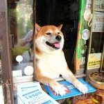 This Shiba Inu That Works in a Little Shop Wins Employee of All the Months