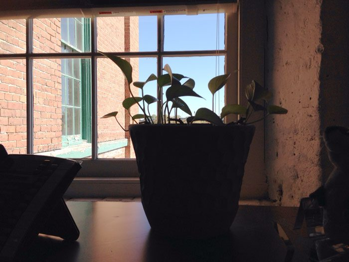 guy-babysits-coworkers-plant-23