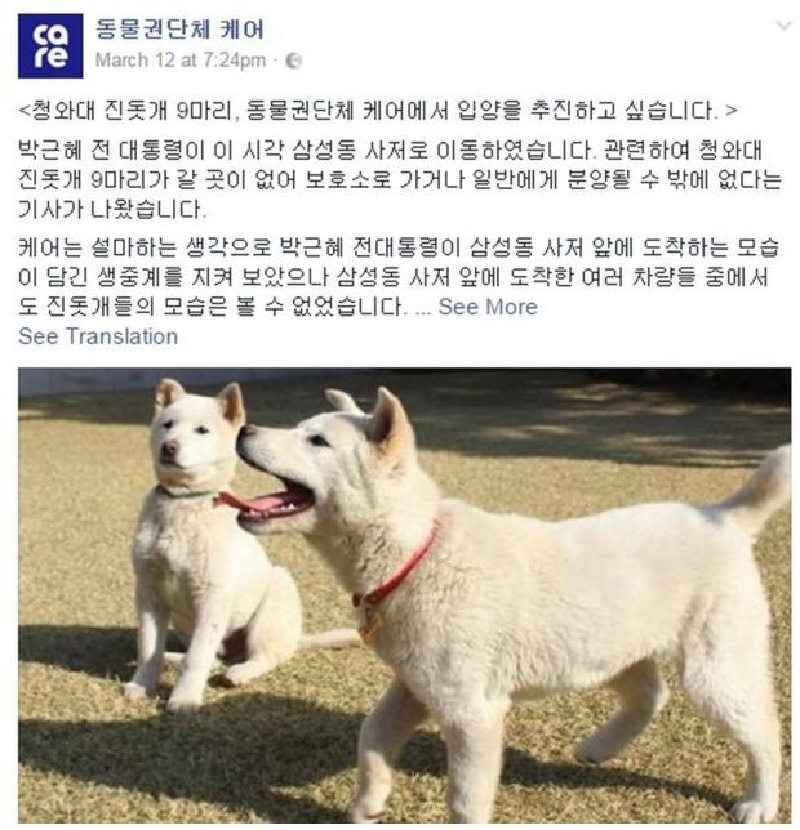 Two puppies left behind by ousted South Korean president find new homes