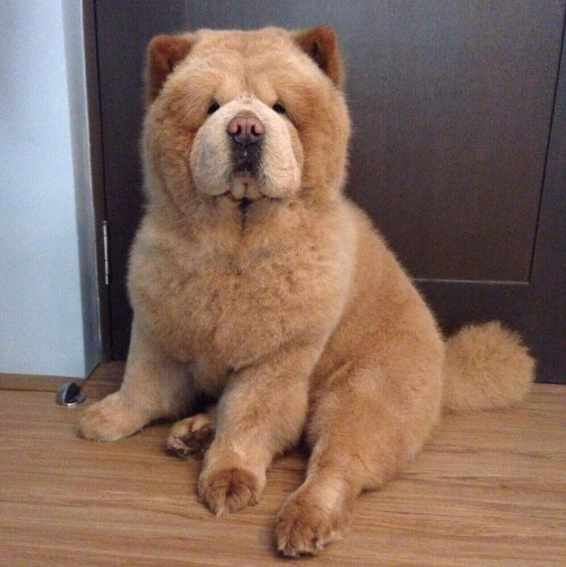 Name For A Dog That Looks Like A Bear