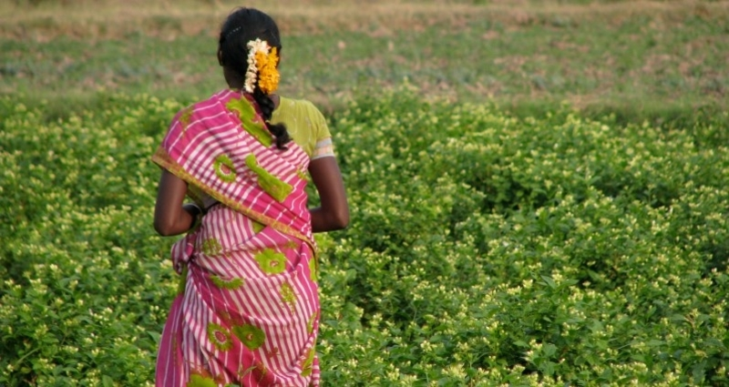 Indian Woman Field