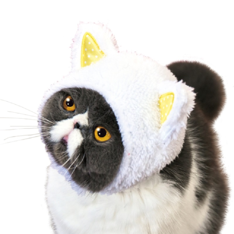 Cat Hats are the One Thing Your Cat Needs Right Meow - 2017 Top ... 41148a53ff3c