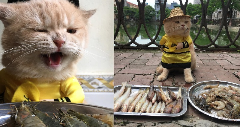 vietnamese cat sells fish while wearing adorable costumes