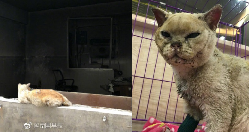 Cat Whose Owner is Believed Killed in a Gas Explosion Refuses to Leave Home