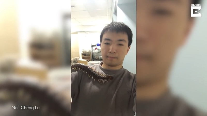 Most often, people go for tarantulas or scorpions when they want to have a more exotic pet; but not Taiwanese student Neil Cheng Le – he prefers to have a creepy, 17-inch long highly venomous centipede crawling on his body.