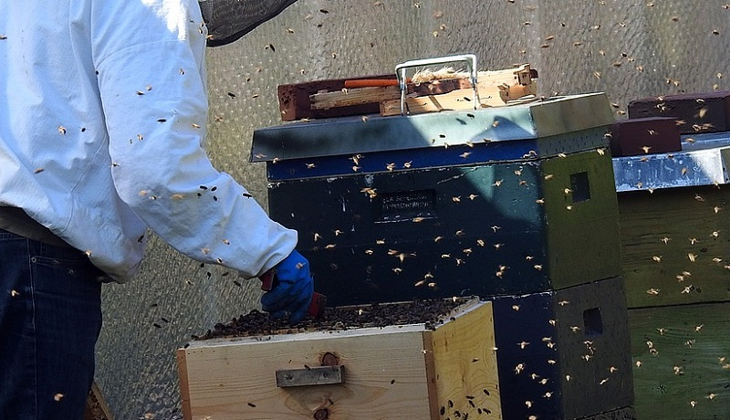 Chinese Couple Keeps 10,000 Bees in Their Apartment, Neighbors Complain of 'Bee Poop'