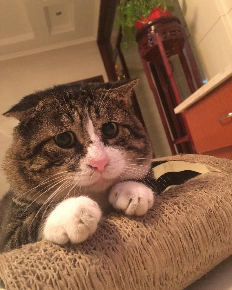Most people perceive cats as being neutral, graceful animals with little to no expressions at all, but they clearly haven't met Ah Fei -- a cat that is winning the hearts of many netizens for his expressive and dramatic reactions to random things.