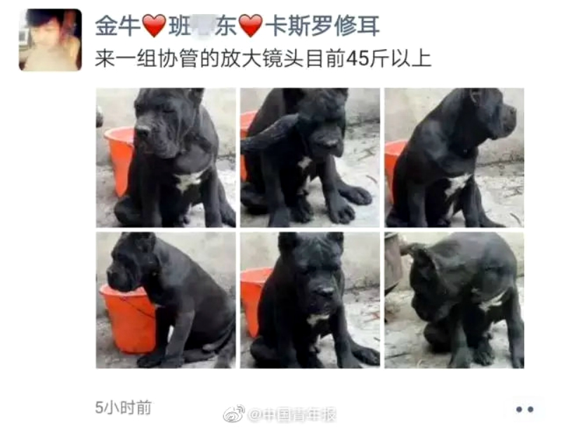 Police detained a man in eastern China for using public occupations to name his pet dogs.