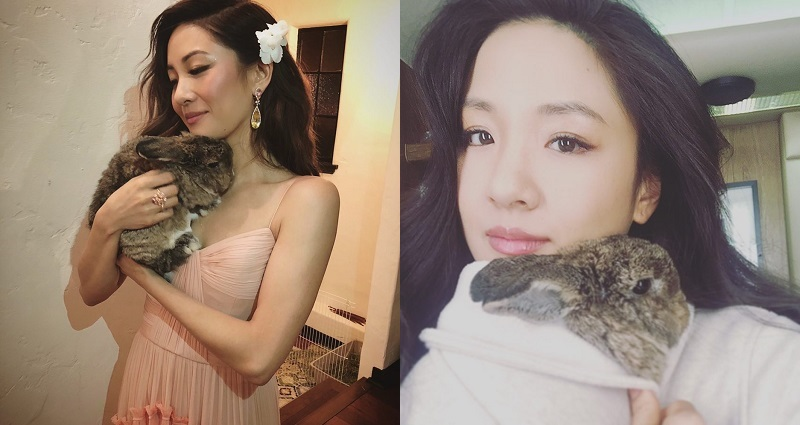 Constance Wu Allegedly Allowed Pet Rabbit to Poop, Pee Anywhere in $6.5 Million Rented Penthouse