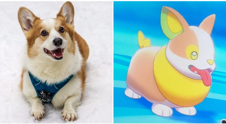 Pokemon Sword as well as Shield Reveals New Corgi Pokemon