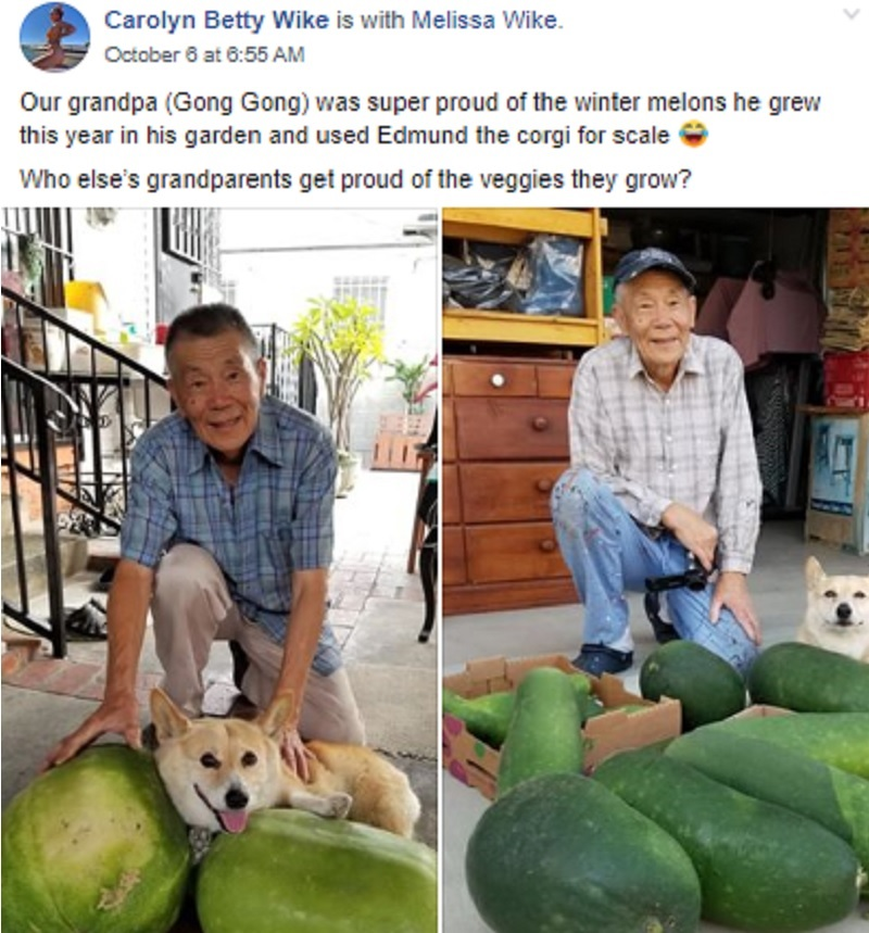 Images of an 89-year-old gong gong (grandpa) posing proudly with his winter melons and adorable corgi have won over thousands of hearts on social media.