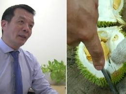 durian gets turned into bandages
