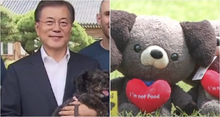 dog meat potentially banned